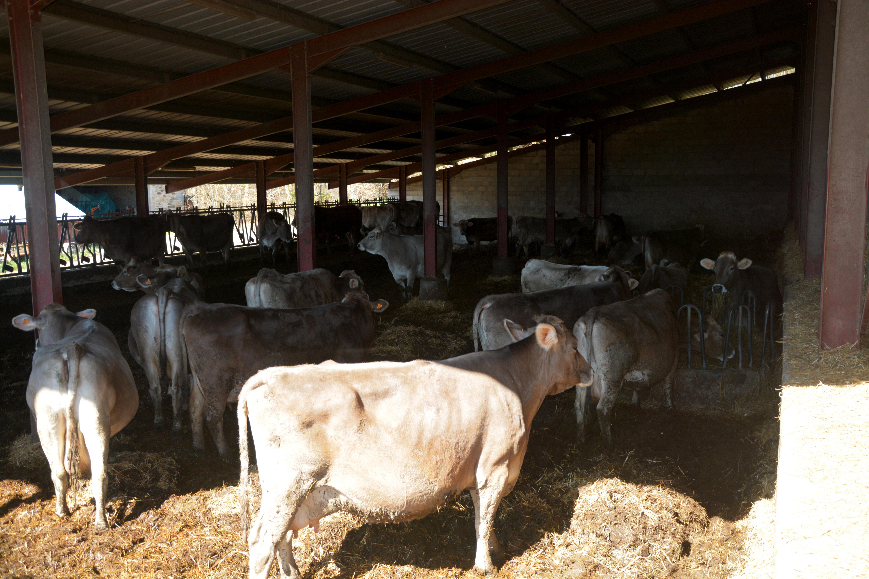 Accidentologie Relative Aux élevages De Volailles Et Gibiers à Plumes (rubrique 2111)